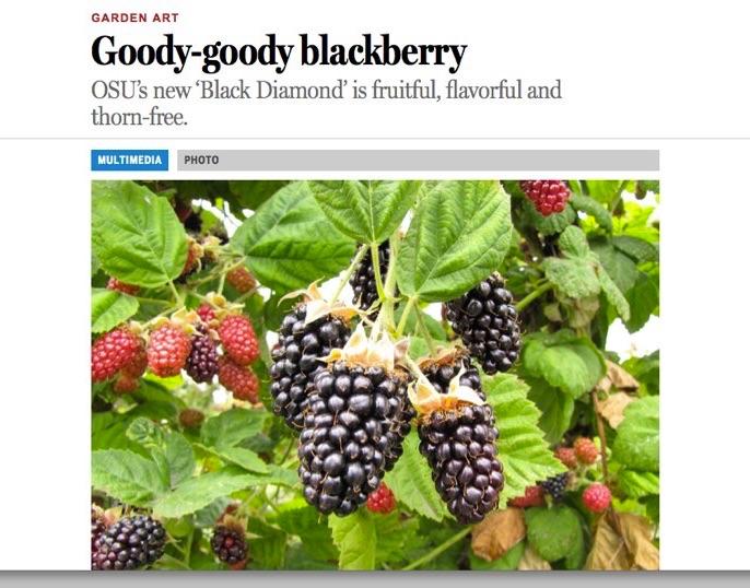 Blackberries-1-1
