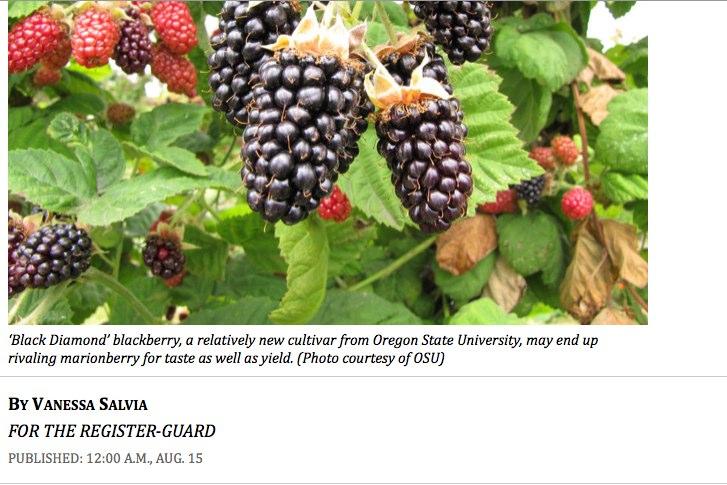 Blackberries-2