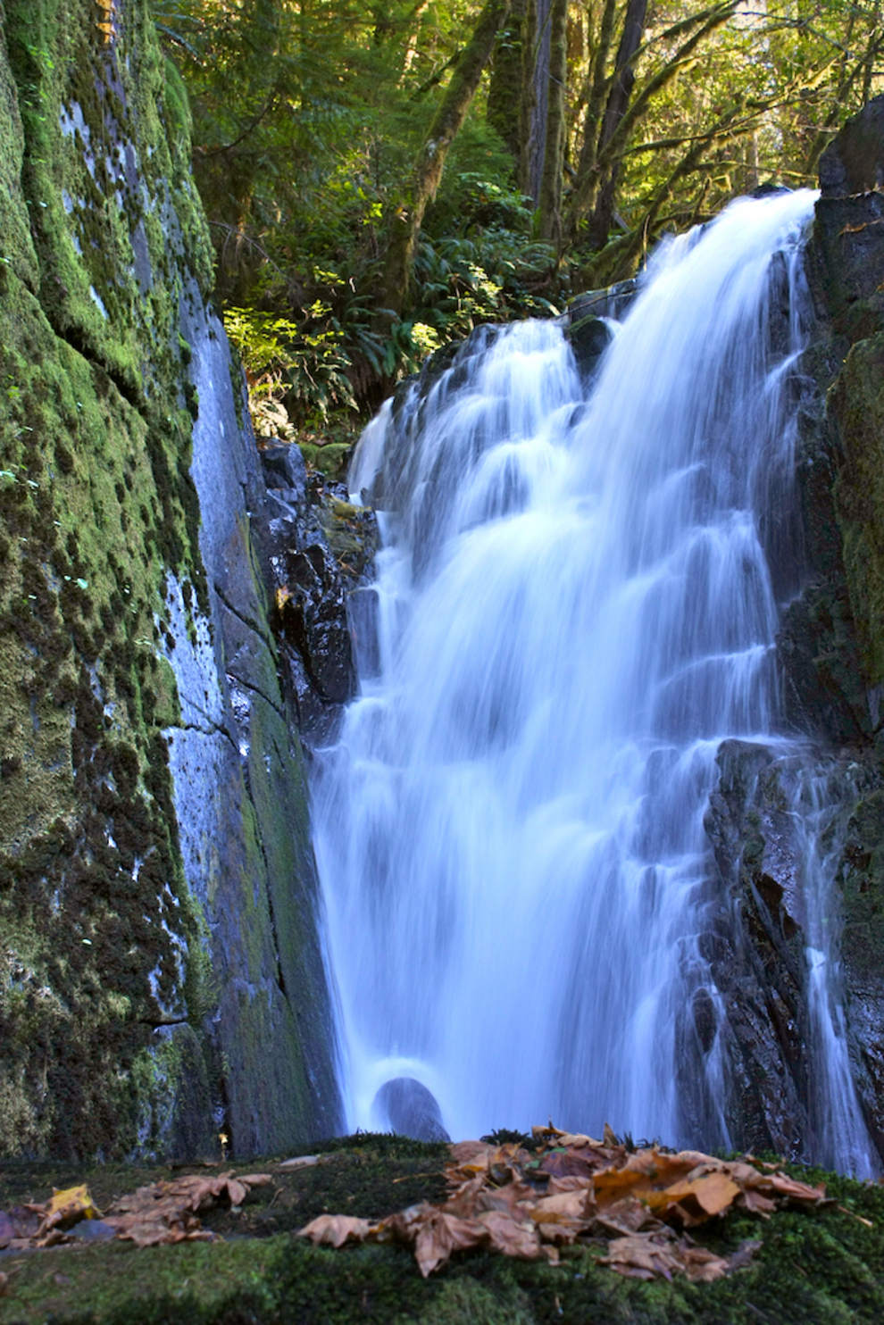 The 20-foot tiered falls are moments from the parking area at Alsea Falls Recreation Site; a 1.2-mile loop trail reaches the nearby campground. Green Peak Falls is 2.8-mile round trip from here. (Collin Andrew/The Register-Guard)
