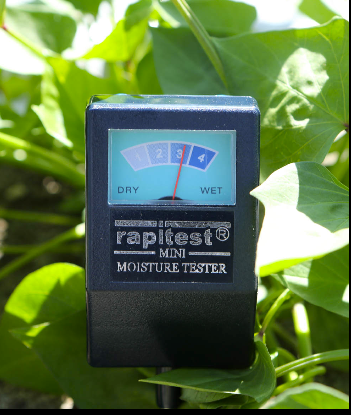 Inexpensive moisture tester is helpful for knowing when sweet potatoes need more water. Photo by Collin Andrew/The Register-Guard